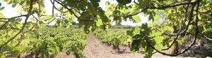 Tour Di Vin : ... Du pied de vigne au verre à pied. Photo Serge Briez, Cap médiations pour Vin4 heures tour