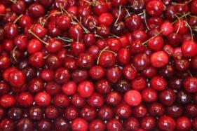 Fruits rouges. Photos Serge Briez, Cap médiations pour Vin4 heures tour