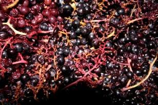 Découverte du vin du Languedoc-Roussillon, Méditerranée. Photo Serge Briez, Cap médiations pour Vin4 heures tour