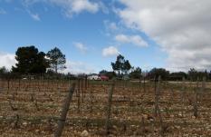 balade dans les vignes de La Palme Domaine Mamaruta Photo Serge Briez Cap médiations pour Vin4 heures tour