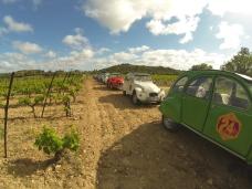 Arrêt groupe dans les vignes
