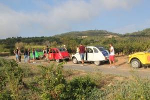 Balade vigneronne insolite en 2CV dans les vignes de méditerranée